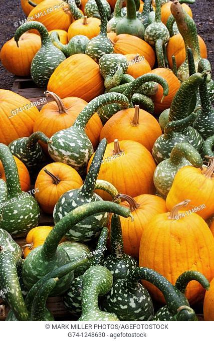 Pumpkin arrangement, California, USA