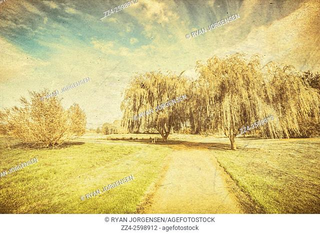 Old grungy field landscape of a path leading to old hanging trees. Wisteria lane