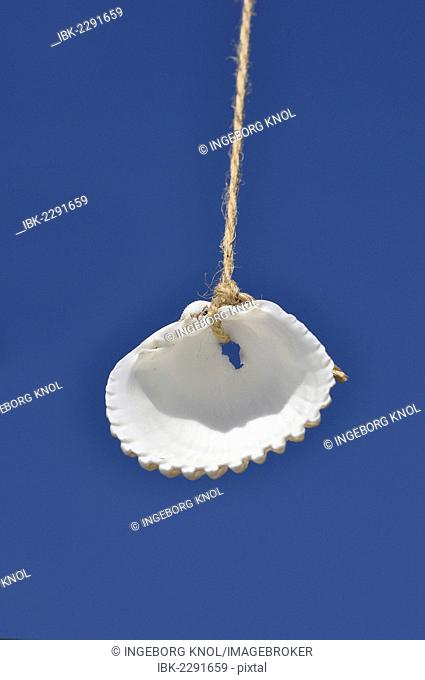 Shell suspended in the air