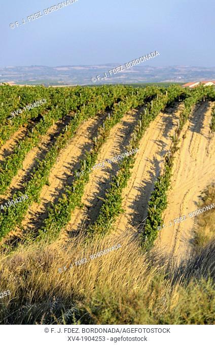 Vineyard panoramic views of Laguardia, La Rioja, Spain