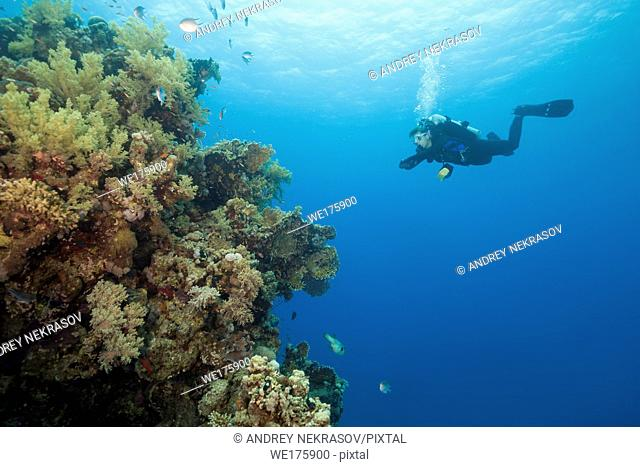 Female scuba diver look at on beautiful coral reef