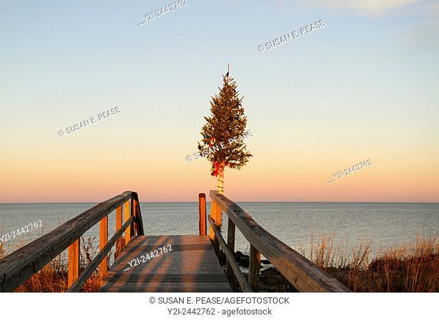 Christmas tree at the end of Sandwich Boardwalk, Sandwich, Cape Cod, Massachusetts, USA