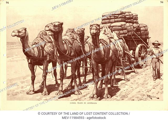 Camel Train in Australia, by Australian artist J Macfarlane. J. Macfarlane was a late colonial period painter, political cartoonist and illustrator