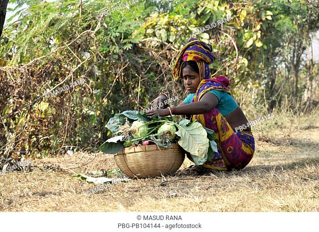 A woman collects basket of turnips These will be sold in the local market Dumuria, Khulna, Bangladesh January 25, 2010