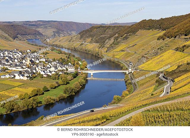 Moselle sinuosity with vineyards and village Trittenheim, view from Leiwen, Rhineland-Palatinate, Germany