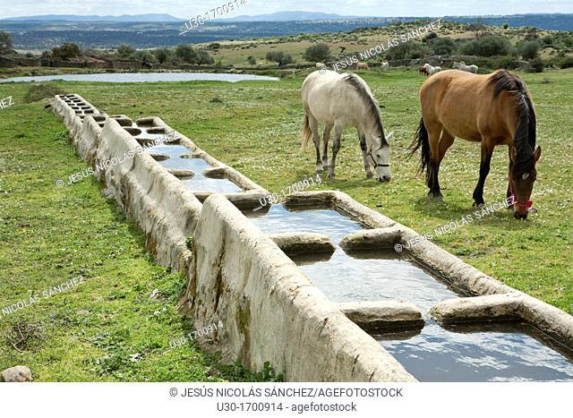 Horses next to a drinking trough in Los Pajares, a site declarated BIC Bien de Interés Cultural as a Ethnographic Site, next to Santibañez el Alto village...