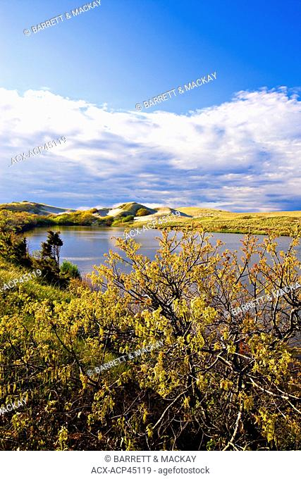 Pilgrim Lake, Provincetown, Cape Cod National Seashore, Massachusetts, United States of America