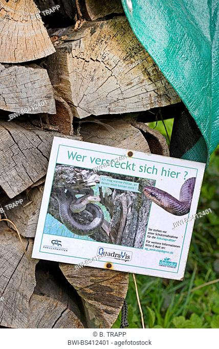 Aesculapian snake (Elaphe longissima, Zamenis longissimus), information signs of a protection project for the Aesculapian snake, Germany, Odenwald
