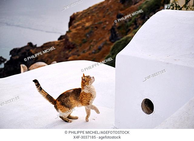 Greece, Cyclades, street cat