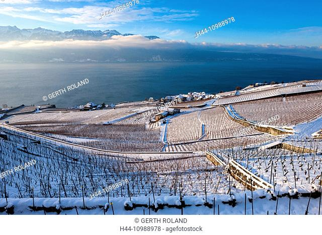 vineyards of Rivaz on lake Geneva in winter in the canton of Vaud