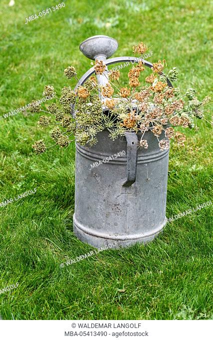 Zinc watering can with cow parsley