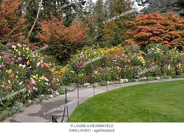 BUTCHART GARDENS DAHLIA BORDER BY THE CONCERT LAWN IN AUTUMN