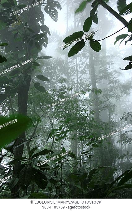 Cloudy Forest, Henri Pittier National Park, Aragua, Venezuela, South America
