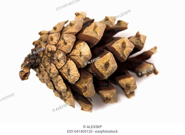 cones of coniferous trees isolated on white