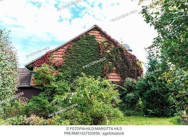 Overgrown house at Barterode, Flecken Adelebsen, Naturraum Sollingvorland, Landkreis Göttingen, Niedersachsen, Germany, HDR / Überwuchertes Haus in Barterode