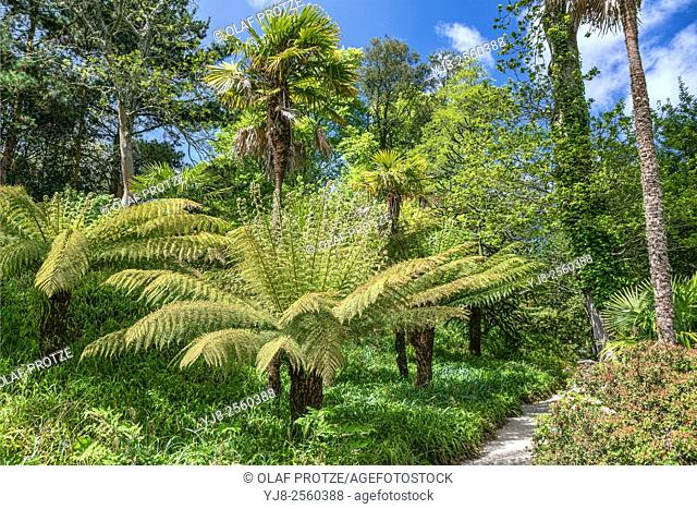 Exotic forest at Trelissick Gardens, Trelissick, Cornwall, England, United Kingdom