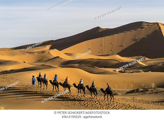 Camel caravan in the Sahara desert near Merzouga, Kingdom of Morocco, Africa