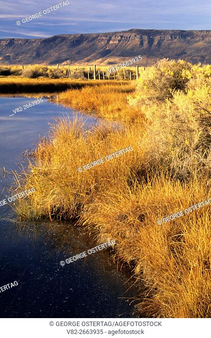 Wetland pond at River Ranch, Summer Lake Wildlife Area, Oregon