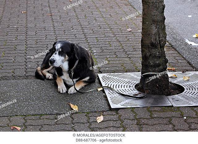 chien abandonne dans la rue