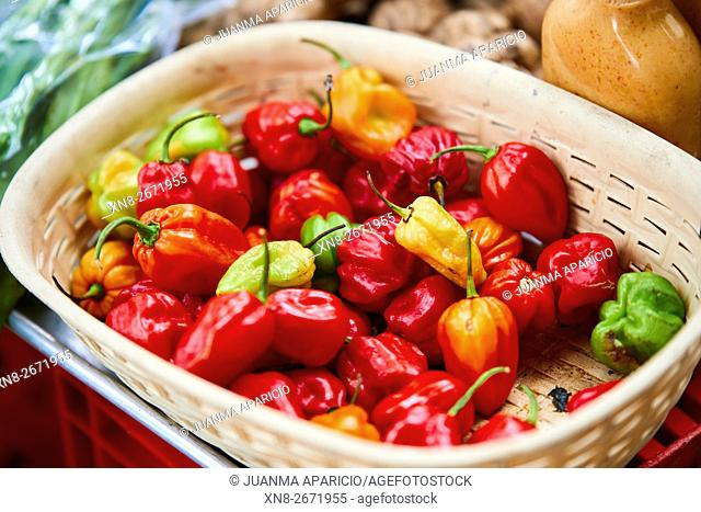 Basket of Peppers, Panama City, Republic of Panama, Central America