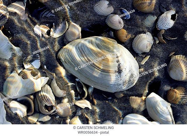 Seashells in the water