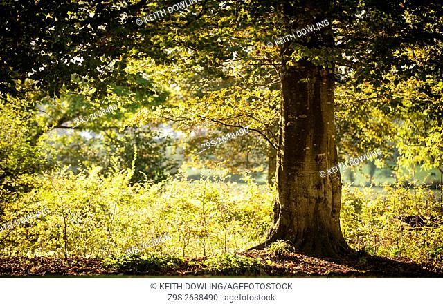 Autumn light under Shade of a Tree. MulacreedenWood Castledermot Co Kildare Ireland