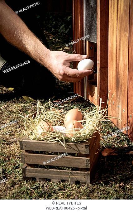 Hand holding hen's egg