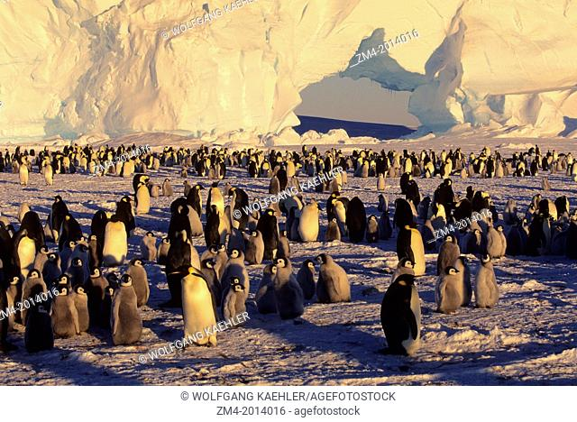 ANTARCTICA, JELBART ICE SHELF, ATKA ICEPORT, EMPEROR PENGUIN COLONY, ICEBERG WITH ARCH