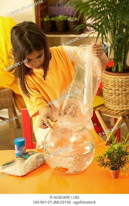 Young girl transferring goldfish from plastic bag to goldfish bowl. (Photo by: Auscape/UIG)
