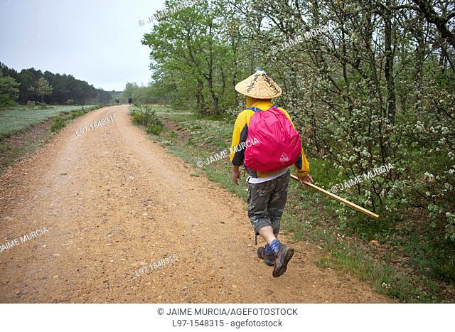 Pilgrim walking the Camino de Santiago near village of Ages, route Frances