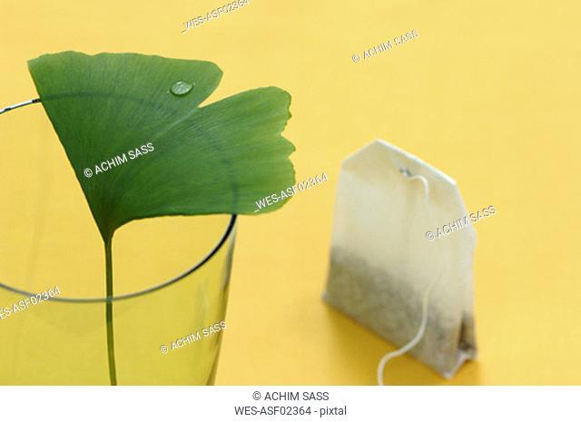 Ginkgo biloba in glass with tea bag