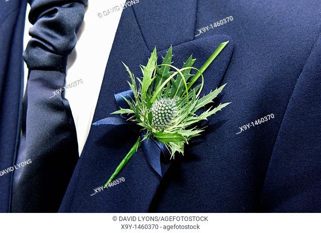 The thistle, national emblem of Scotland, worn as a flower buttonhole on lapel of mans suit jacket