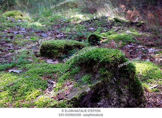 Moos auf Stein im Wald