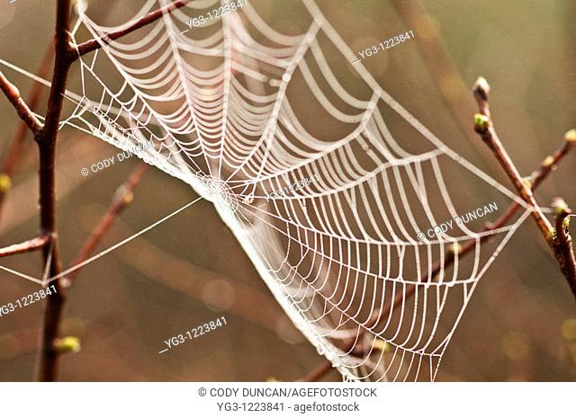 Spiderweb wet with morning dew