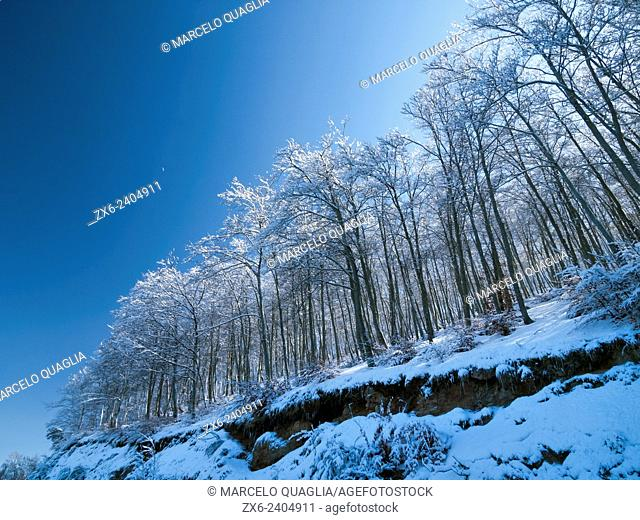 Winter Beech forest after snowstorm. Montseny Natural Park. Barcelona province, Catalonia, Spain