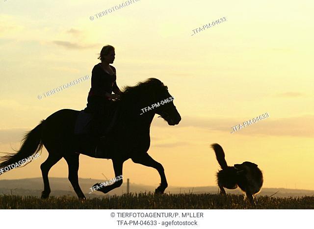 woman rides Icelandic horse