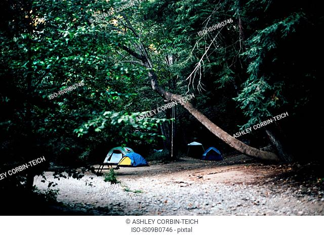Small group of tents camping in dark forest, Big Sur, California, USA