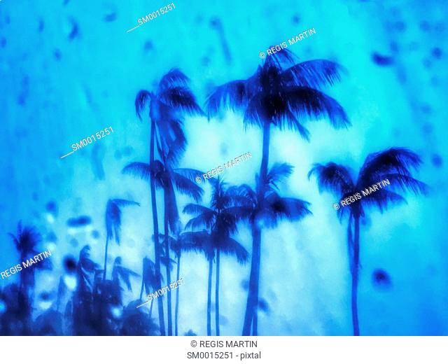 Palm trees silhouettes under the monsoonal rain in Darwin Australia, with a blue filter