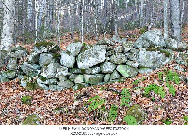 Stone wall along an old road, near the abandoned Bartlett Marston homestead, in Benton, New Hampshire USA. This road is located off the North and South Road...