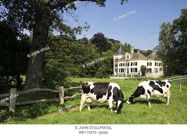 Two cows in front of manor de Haere near Hengforden in the Dutch province Overijssel