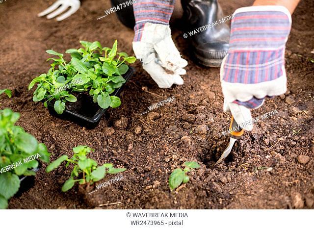 Cropped image of gardener digging soil while planting