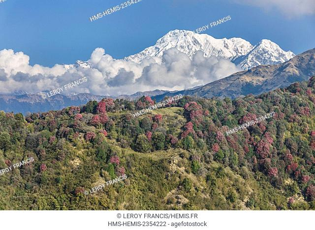 Nepal, Gandaki zone, Pokhara, blooming rhododendrons hill before Annapurna South (aerial view)
