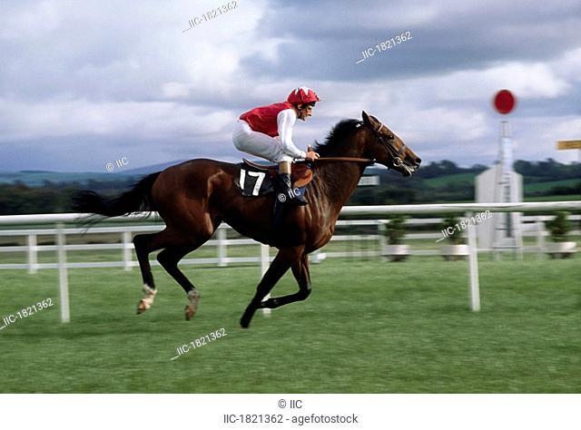 Naas, Co Kildare, Ireland, Horse racing