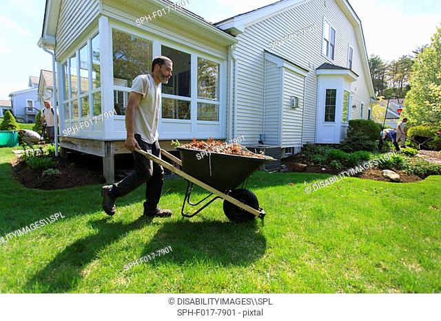 Landscapers clearing weeds at a home garden and carrying them away in a wheelbarrow