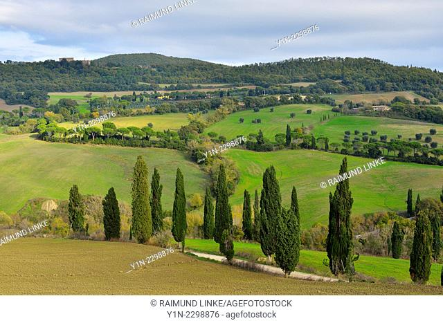 Country Road Winding up Hill with Cypress Trees, La Foce, Val d'Orcia, Provinz Siena, Tuscany, Italy