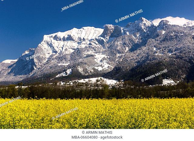 Blossoming rape field in the 'Bündner Herrschaft' (Signuradi) area, canton of Grisons, Switzerland