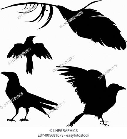 Crows and ravens vector silhouettes