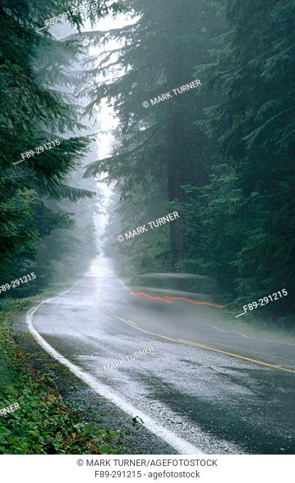 Highway 123 along Ohanapecosh on a rainy day. Mount Rainier National Park. Washington, USA