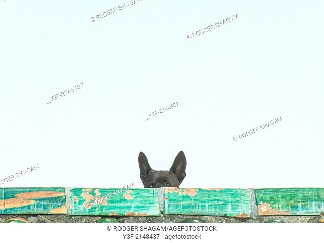 A small dog peers over the top of a low wall. Cape Town, South Africa
