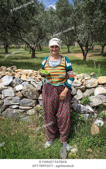 OLD WOMAN SELLING PLUMS IN FRONT OF A LOW STONE WALL AND AN OLIVE ORCHARD, ZEYTINLI NEAR EDREMIT, THE OLIVE RIVIERA, NORTH OF IZMIR, TURKEY